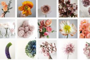 12+ Tips for Keeping Your Flowers Fresh and Beautiful