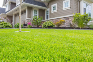 How to Get a Really Green Lawn (Even If You Have No Green Thumb)
